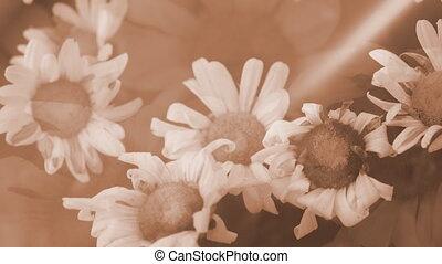 Grunge Flower Background Loop Two