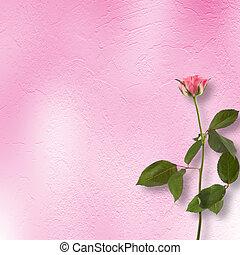 grunge, fondo, per, congratulazione, con, bello, rosa