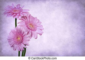 Grunge Gerbera Daisies - Grunge pink gerbera daisies.