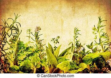 Grunge Herbs - Herbs on a grunge background, with...