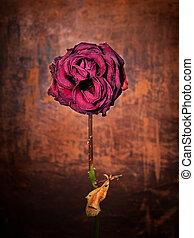 grunge, holt, rózsa