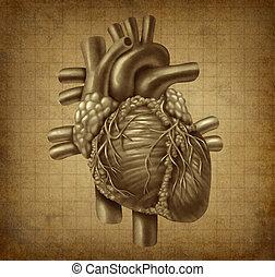 Grunge Human heart - Human heart in old vintage grunge ...