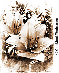 Grunge lillies - Grunge background of lily flowers
