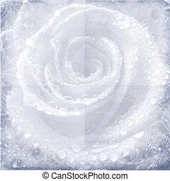grunge, mooi, rozen, achtergrond
