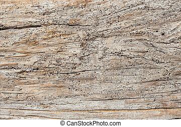 Grunge of wood texture