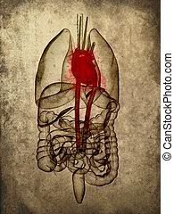grunge organs - 3d rendered illustration of human organs -...