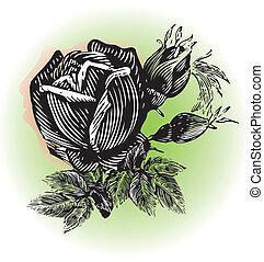 grunge, roser, logo, konstruktion, vinhøst
