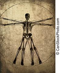 grunge skeleton - 3d rendered illustration of a human ...