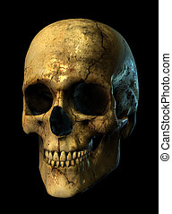 3D render of a grunge skull, 3/4 view.