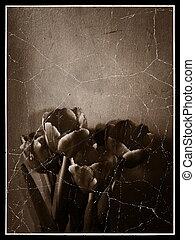 Grunge Tulips Photo