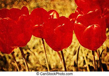 grunge, vendimia, plano de fondo, de, flores, (tulips), con, especial, andrajoso, efecto