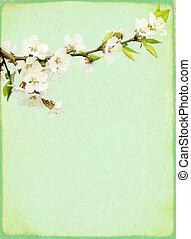 Grunge vintage background with flowers of cherry