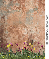 grunge wall with tulips