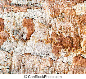 grunge wood bark texture background