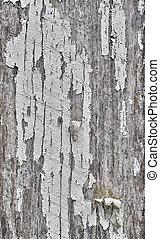 grungy, 树木, 老, 背景, 结构