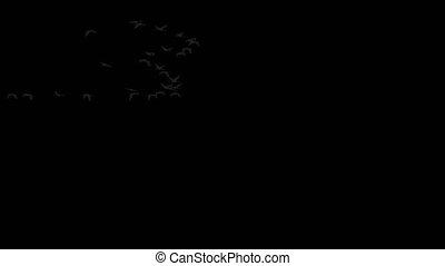 grupa, żurawie, wielki, przeźroczysty, tło, przelotny
