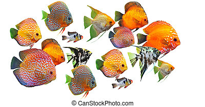 grupa, od, ryby