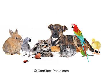 grupa zwierząt, na białym, tło