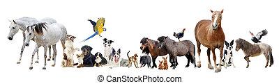 grupa zwierząt