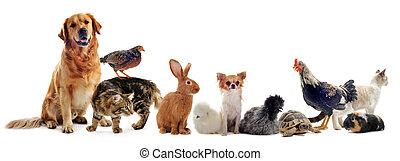 grupo, animais estimação