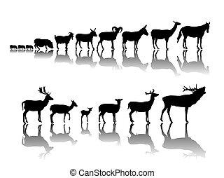 grupo, animales, hoofed