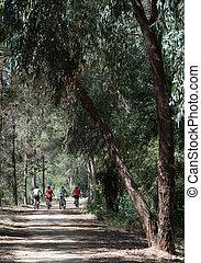 grupo,  Bikers, parque, bosque,  biking, camino