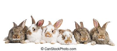 grupo, coelhos, fila