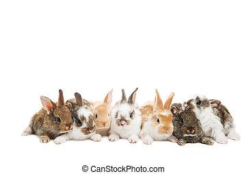grupo, conejos, fila