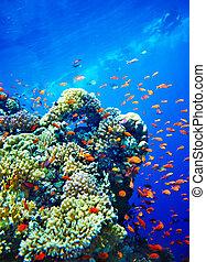 grupo, coral, water., pez