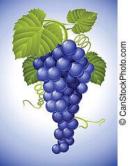 grupo, de, azul, uva, con, hojas verdes
