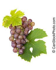 grupo, de, azul, uvas