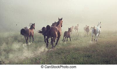 grupo, de, cavalos, ligado, a, prado