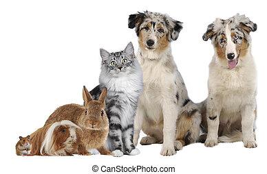 grupo, de, diferente, mascotas