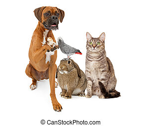 grupo, de, dometic, mascotas, el sentarse junto