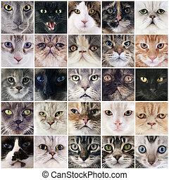 grupo, de, gatos