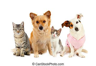 grupo, de, gatos, e, cachorros
