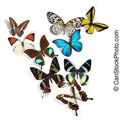 grupo, de, mariposas