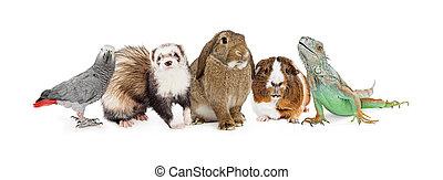 grupo, de, pequeno, doméstico, animais estimação, sobre, branca