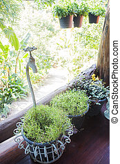 grupo, de, pequeno, planta verde