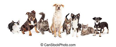 grupo grande, de, gatos, y, perros, juntos