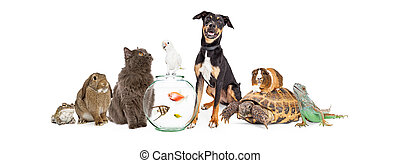 grupo grande, de, mascota, animales, juntos