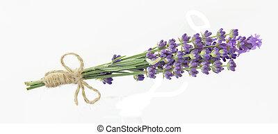 grupo, isolado, closeup., fundo, flores, lavanda, sobre, branca