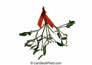 grupo, mistletoe, (viscum, album), com, bagas