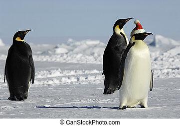 grupo, natal, pingüim
