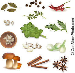 grupo, spices., vector.
