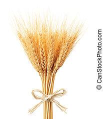 grupo, trigo, orelhas