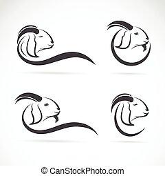 grupo, vector, diseño, plano de fondo, cabra blanca