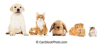 grupp, Älsklingsdjur