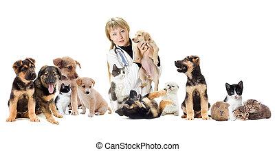 grupp, av, älsklingsdjur, och, veterinär