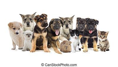 grupp, av, älsklingsdjur